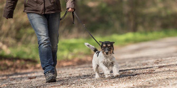Hundekot-Paparazzi sind verboten