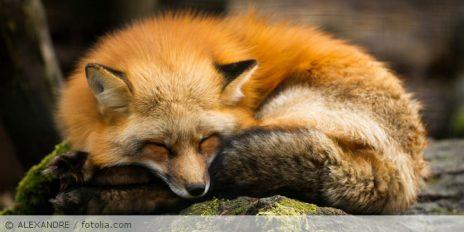 Sicherheitslücke bei Firefox bis Version 58.0.0