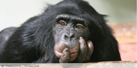 Schimpanse_fotolia_144913088