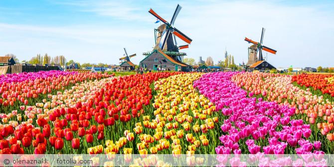 Holland_Tulpenfeld_Windmuehle_fotolia_197561373