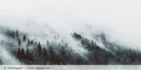 Nebelwolken_Wald_Nebel_AdobeStock_311094292